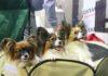 III Mikołajkowa wystawa psów